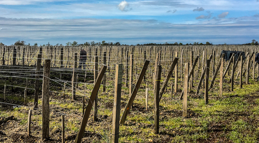Vine and winemaking, Bordeaux 2018